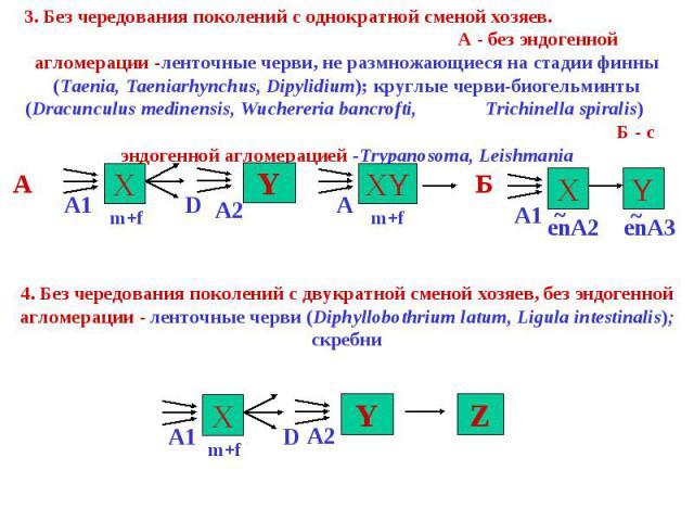 3. Без чередования поколений с однократной сменой хозяев. А - без эндогенной агломерации -ленточные черви, не размножающиеся на стадии финны (Taenia, Taeniarhynchus, Dipylidium); круглые черви-биогельминты (Dracunculus medinensis, Wuchereria bancrof…