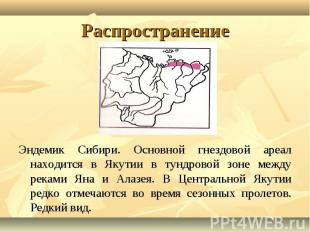 Эндемик Сибири. Основной гнездовой ареал находится в Якутии в тундровой зоне меж