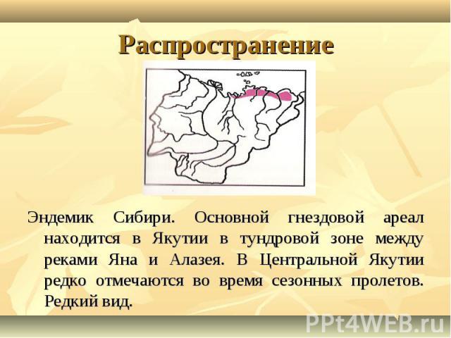Эндемик Сибири. Основной гнездовой ареал находится в Якутии в тундровой зоне между реками Яна и Алазея. В Центральной Якутии редко отмечаются во время сезонных пролетов. Редкий вид. Эндемик Сибири. Основной гнездовой ареал находится в Якутии в тундр…