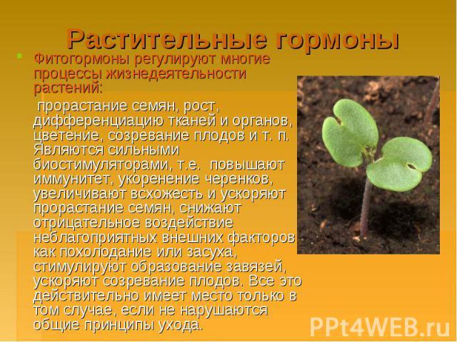 Растительные гормоны Фитогормоны регулируют многие процессы жизнедеятельности растений: прорастание семян, рост, дифференциацию тканей и органов, цветение, созревание плодов и т. п. Являются сильными биостимуляторами, т.е. повышают иммунитет, укорен…