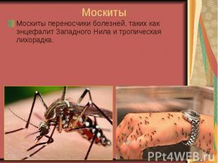 Москиты Москиты переносчики болезней, таких как энцефалит Западного Нила и тропи