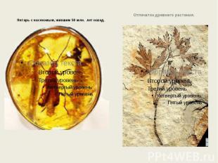 Янтарь с насекомым, жившим 50 млн. лет назад. Янтарь с насекомым, жившим 50 млн.