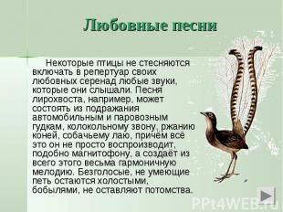 Некоторые птицы не стесняются включать в репертуар своих любовных серенад любые