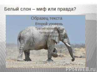 Белый слон – миф или правда?