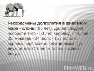 Рекордсмены долголетия в животном мире - слоны (85 лет). Далее следуют носорог и