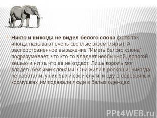 Никто и никогда не видел белого слона (хотя так иногда называют очень светлые эк