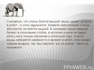 Считается, что слоны боятся мышей: мышь может залезть в хобот - и слон задохнетс