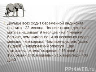 Дольше всех ходит беременной индийская слониха - 22 месяца. Человеческого детены
