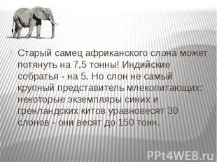 Старый самец африканского слона может потянуть на 7,5 тонны! Индийские собратья