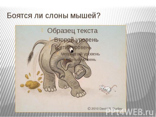 Боятся ли слоны мышей?