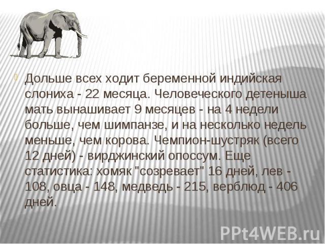 Дольше всех ходит беременной индийская слониха - 22 месяца. Человеческого детеныша мать вынашивает 9 месяцев - на 4 недели больше, чем шимпанзе, и на несколько недель меньше, чем корова. Чемпион-шустряк (всего 12 дней) - вирджинский опоссум. Еще ста…