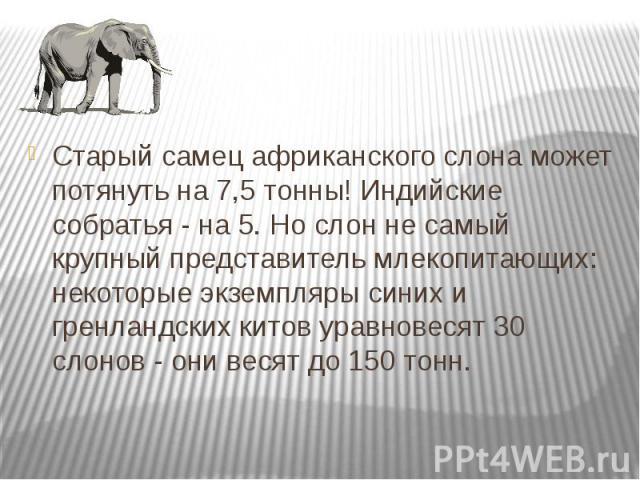 Старый самец африканского слона может потянуть на 7,5 тонны! Индийские собратья - на 5. Но слон не самый крупный представитель млекопитающих: некоторые экземпляры синих и гренландских китов уравновесят 30 слонов - они весят до 150 тонн. Старый самец…