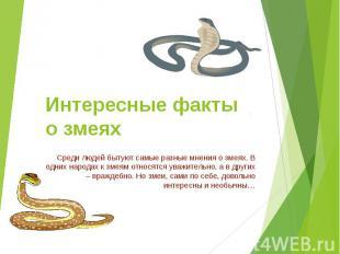 Интересные факты о змеях Среди людей бытуют самые разные мнения о змеях. В одних
