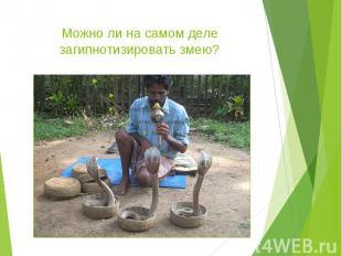 Можно ли на самом деле загипнотизировать змею?