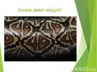 Зачем змее чешуя?