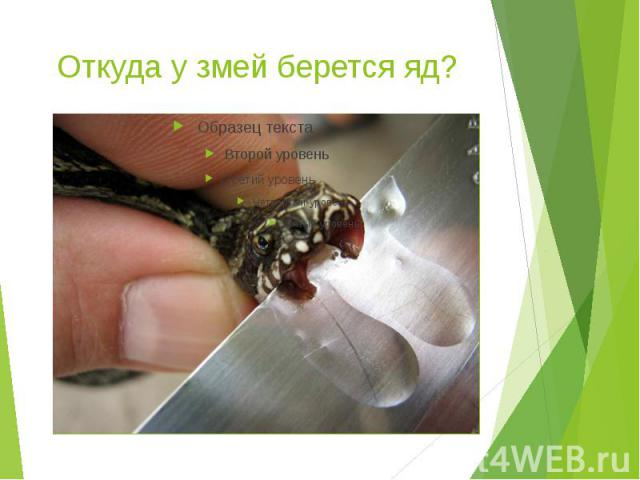 Откуда у змей берется яд?