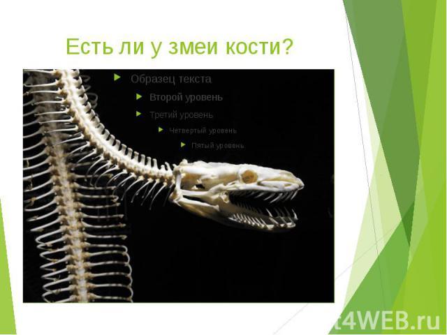 Есть ли у змеи кости?