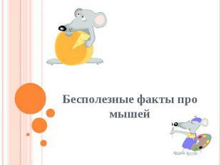 Бесполезные факты про мышей