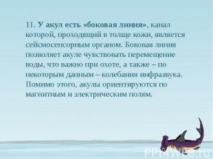11. У акул есть «боковая линия», канал которой, проходящий в толще кожи, являетс