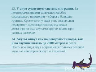 13. У акул существует система миграции. За некоторыми видами замечено подобие со
