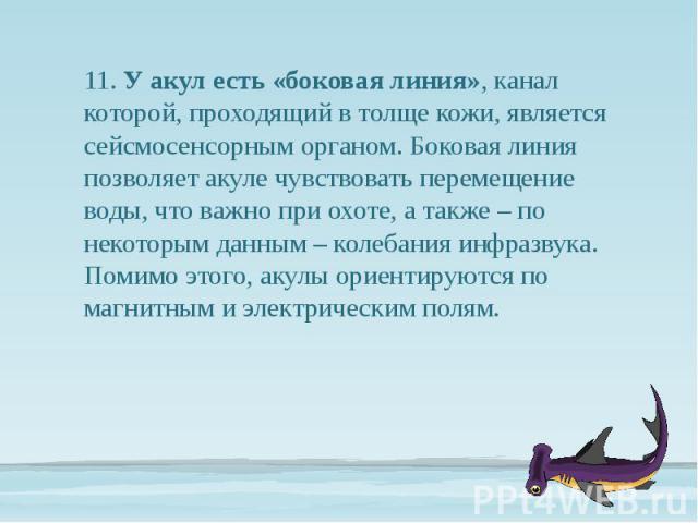 11. У акул есть «боковая линия», канал которой, проходящий в толще кожи, является сейсмосенсорным органом. Боковая линия позволяет акуле чувствовать перемещение воды, что важно при охоте, а также – по некоторым данным – колебания инфразвука. Помимо …