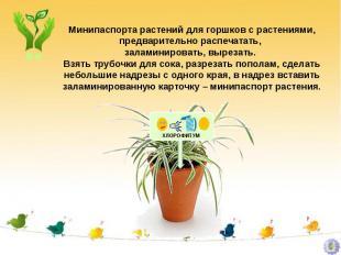 Минипаспорта растений для горшков с растениями, предварительно распечатать, зала