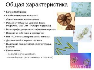 Общая характеристика Более 30000 видов Свободноживущие и паразиты Одноклеточные,
