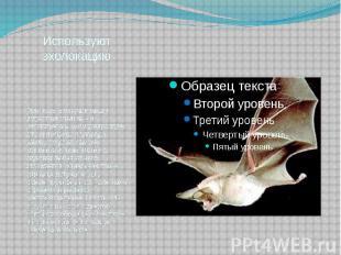 Используют эхолокацию При полете летучие мыши издают не слышимые человеческим ух