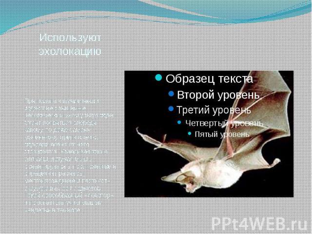 Используют эхолокацию При полете летучие мыши издают не слышимые человеческим ухом ультразвуки. Стоит появиться впереди какому-то даже самому маленькому препятствию, звуковая волна от него отражается. Улавливая такие сигналы, летучая мышь ориентируе…