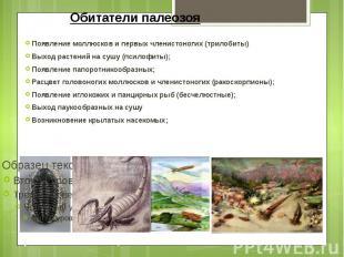 Обитатели палеозоя Появление моллюсков и первых членистоногих (трилобиты) Выход