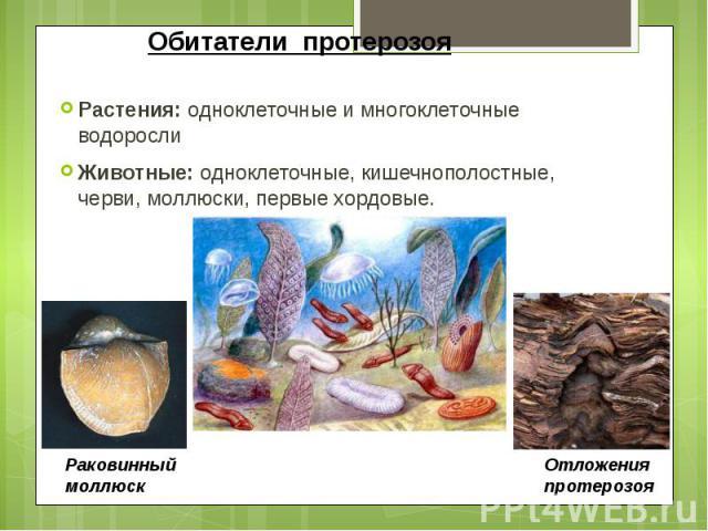 Обитатели протерозоя Растения: одноклеточные и многоклеточные водоросли Животные: одноклеточные, кишечнополостные, черви, моллюски, первые хордовые.