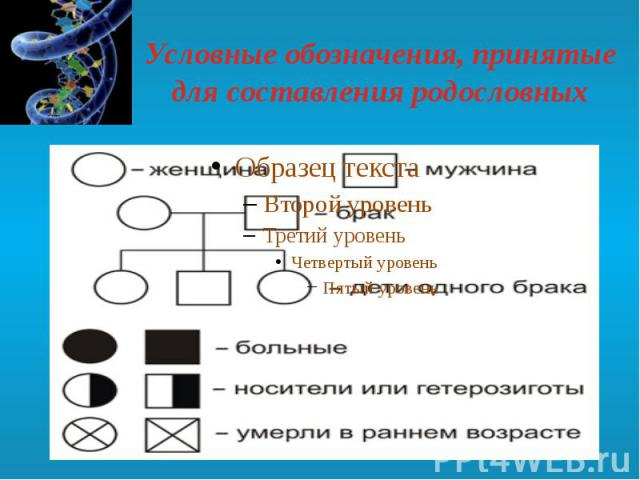 Условные обозначения, принятые для составления родословных