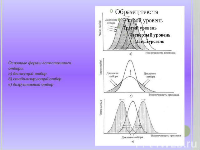 Основные формы естественного отбора: а) движущий отбор б) стабилизирующий отбор в) дизруптивный отбор