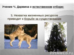 Учение Ч. Дарвина о естественном отборе: 3. Нехватка жизненных ресурсов приводит