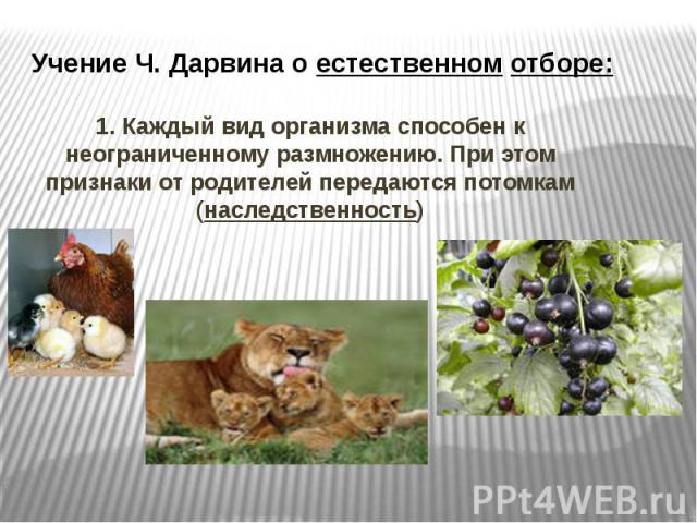 Учение Ч. Дарвина о естественном отборе: 1. Каждый вид организма способен к неограниченному размножению. При этом признаки от родителей передаются потомкам (наследственность)