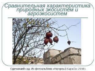 Одичавший сад. Из фотоальбома «Нагорный Карабах 2008». Одичавший сад. Из фотоаль