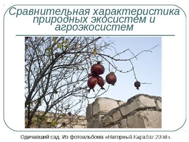 Одичавший сад. Из фотоальбома «Нагорный Карабах 2008». Одичавший сад. Из фотоальбома «Нагорный Карабах 2008».
