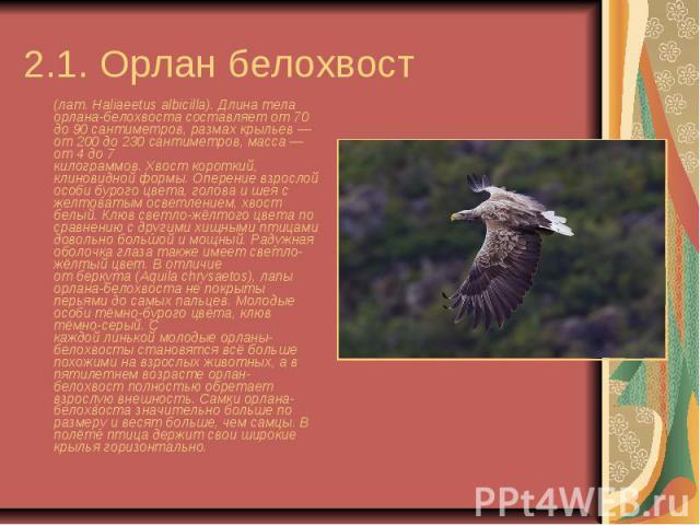 2.1. Орлан белохвост (лат.Haliaeetus albicilla). Длина тела орлана-белохвоста составляет от 70 до 90 сантиметров, размах крыльев— от 200 до 230 сантиметров, масса— от 4 до 7 килограммов.Хвосткороткий, клиновидной формы.…