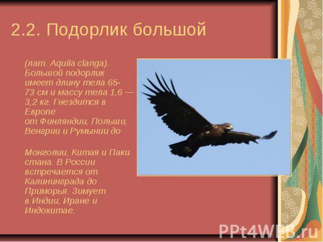 2.2. Подорлик большой (лат.Aquila clanga). Большой подорлик имеет длину тела 65-73см и массу тела 1,6— 3,2кг. Гнездится в Европе отФинляндии,Польши,ВенгриииРумыниидо Монголии,Ки…