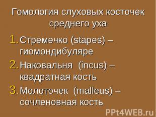 Стремечко (stapes) – гиомондибуляре Стремечко (stapes) – гиомондибуляре Наковаль