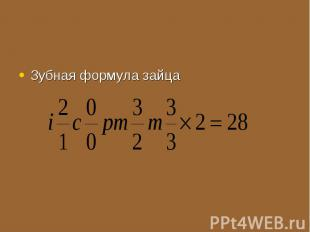 Зубная формула зайца Зубная формула зайца