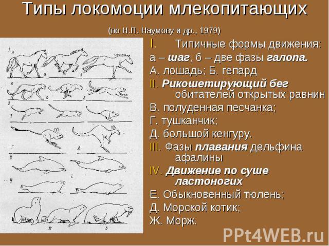 Типичные формы движения: Типичные формы движения: а – шаг, б – две фазы галопа. А. лошадь; Б. гепард II. Рикошетирующий бег обитателей открытых равнин В. полуденная песчанка; Г. тушканчик; Д. большой кенгуру. III. Фазы плавания дельфина афалины IV. …