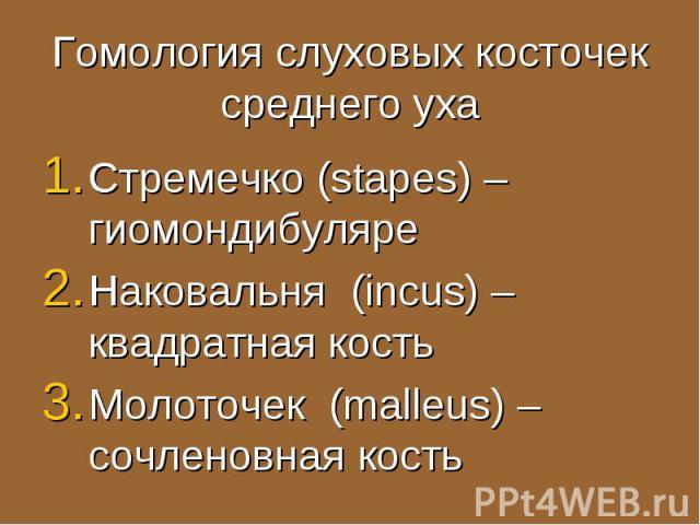 Стремечко (stapes) – гиомондибуляре Стремечко (stapes) – гиомондибуляре Наковальня (incus) – квадратная кость Молоточек (malleus) – сочленовная кость
