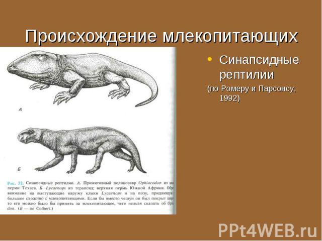 Синапсидные рептилии Синапсидные рептилии (по Ромеру и Парсонсу, 1992)