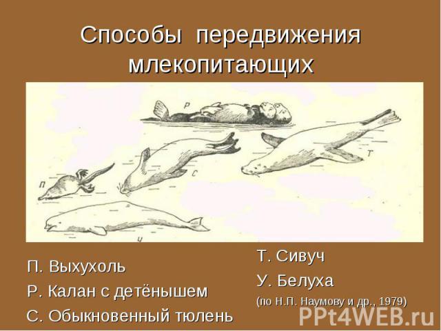 П. Выхухоль П. Выхухоль Р. Калан с детёнышем С. Обыкновенный тюлень
