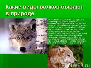 Какие виды волков бывают в природе Обыкновенный волк имеет совершенно разную окр