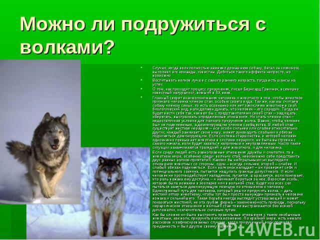 Можно ли подружиться с волками? Случаи, когда волк полностью заменял домашнюю собаку, бегал за хозяином, выполнял его команды, известны. Добиться такого эффекта непросто, но возможно. Воспитывать волков лучше с самого раннего возраста, тогда есть ша…