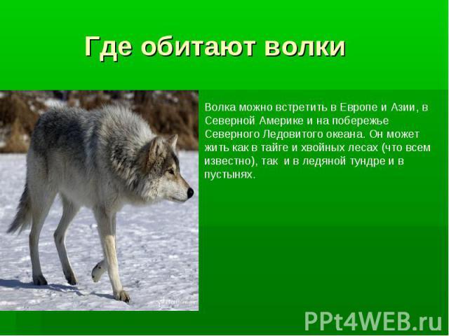 Где обитают волки