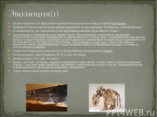 Хищные произошли от Миациловых примерно 50 миллионов лет назад в позднем Палеоци