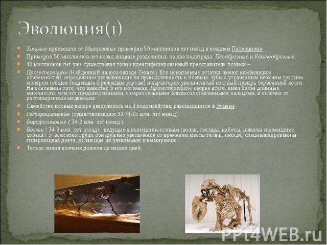 Хищные произошли от Миациловых примерно 50 миллионов лет назад в позднем Палеоционе. Хищные произошли от Миациловых примерно 50 миллионов лет назад в позднем Палеоционе. Примерно 50 миллионов лет назад хищные разделились на два подотряда: Псообразны…